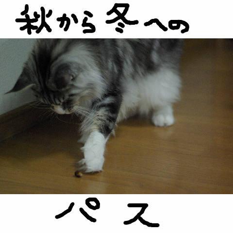 Nyangel0332