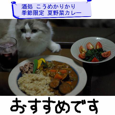 Nyangel0424_jp