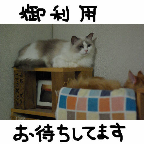 Nyangel0449