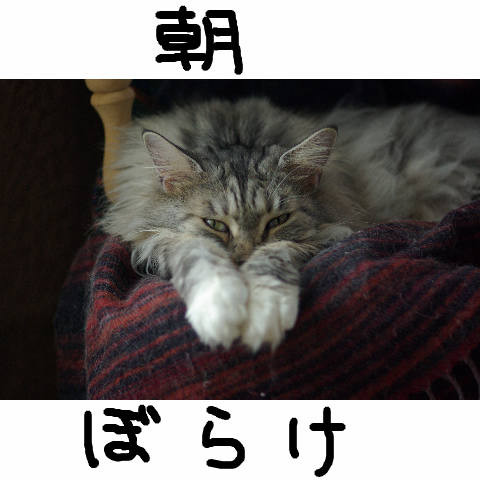 Nyangel0469
