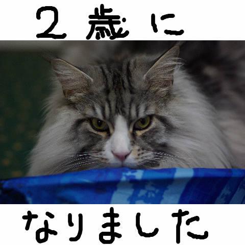 Nyangel73