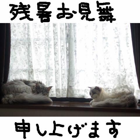 Nyangel018